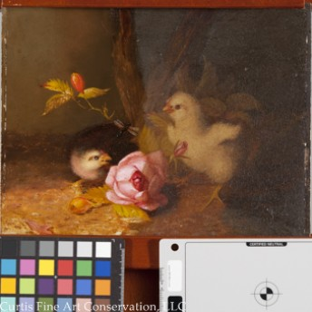 Unidentified Artist, Baby Chicks in a Landscape, ca. late 19th c. This image shows the painting with the varnish half cleaned.